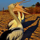Pelican Talk by Miles Moody