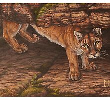 All Present - Cougar by john mcfaul