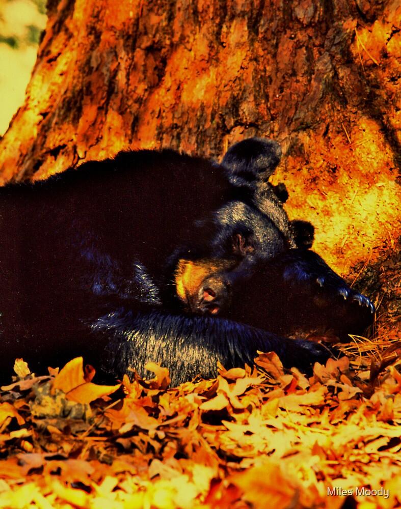 Let Him Sleep... by Miles Moody