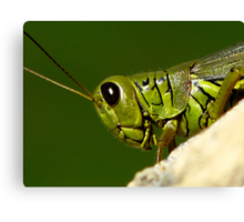 Portrait Of A Grasshopper Canvas Print