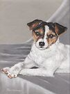 Jack Russell puppy by Pam Humbargar