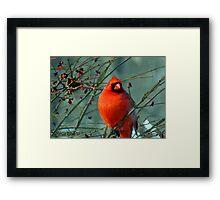 Spectacular Red Cardinal Framed Print