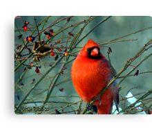 Spectacular Red Cardinal Canvas Print