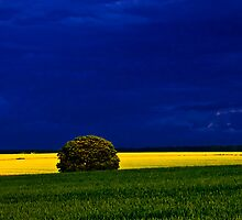 Landscape in blue, yellow and green by photontrappist
