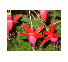 Red & Pink Fuschia Art Print