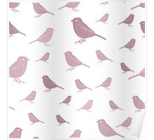 Sweet birds on a white background pink Poster