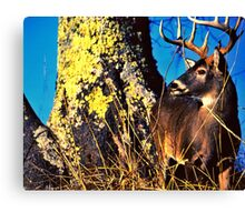 Mr. Magestic Canvas Print