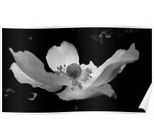 black&white flower.. Poster