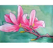 Magnolia XII Photographic Print