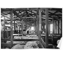 Shearing Shed Lismore Vic Day 1. Poster