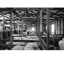 Shearing Shed Lismore Vic Day 1. Photographic Print