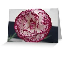 Red and White Carnation Flower Greeting Card