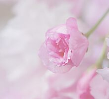 Delicate Blossoms by larie200