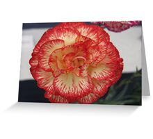 Red and Yellow Carnation Flower Greeting Card
