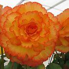 Orange Yellow Flower by PoetCRS