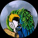 """Blue & Gold Macaw. (Jungle Gardens, Sarasota, FL)"" by amyglasscockart"