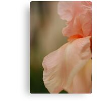 Pure Peach Canvas Print