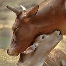 Mom & Newborn in a Blissful Moment by Joe Jennelle