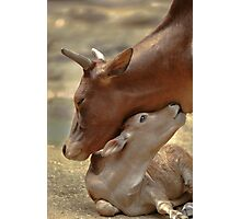 Mom & Newborn in a Blissful Moment Photographic Print