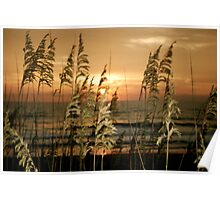 sea oats at sunrise in old Nags Head Poster