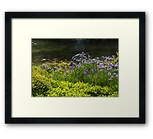 Showy Irises on the Sunny Bank of the Pond Framed Print