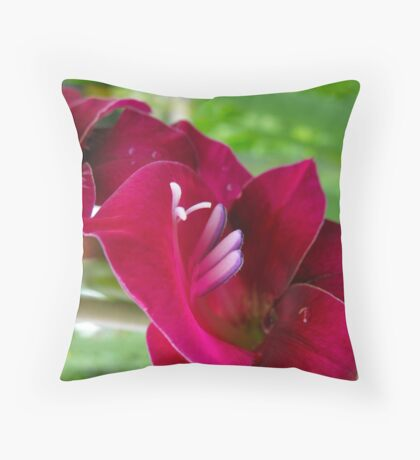 Cyclamen Gladiola Erruptus Throw Pillow