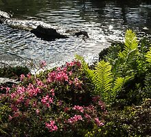 Silver River, Wild Rhododendrons and Bright Green Ferns by Georgia Mizuleva