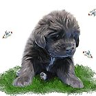 Newfy puppy & butterflies by Cazzie Cathcart