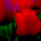 Red Blaze by Lozzar Flowers & Art