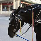 Cody - Cincinnati Carriage Horse by Tony Wilder