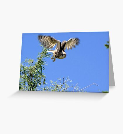 Great Horned Owl ~ Sherry's Juvenile Greeting Card