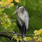 Autumn Heron by Bill McMullen