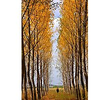First autumnal colors Photographic Print