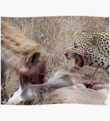 Hyena and Leopard Sharing Meal Poster
