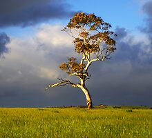 Before the Storm by Photography1804