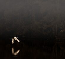Ghost of the Bayou  by Michelle  Morris