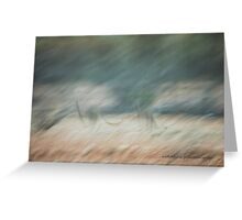 Kangaroo Abstract Flight © Vicki Ferrari Photography Greeting Card