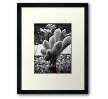 'the furry flower  Framed Print