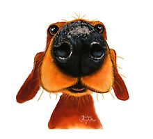 NOSEY DOG 'NOSEY NANDO' BY SHIRLEY MACARTHUR Photographic Print