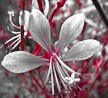 'orient blossom by JustJazzy