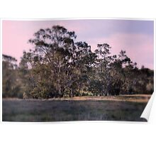 Bank of Eucalypts Poster