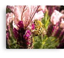 'nectar victory Canvas Print