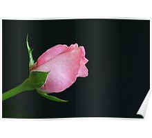 Pink Bud Just for you  Poster