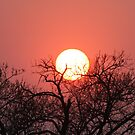 Sabi sands august sunset by jozi1