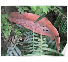 Red Leaf, Green Fern Poster