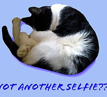 Not Another Selfie??!! - Cat by SusieJM