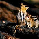 Squirrelers Buddies by Nancy Stafford