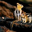 Squirrelers Buddies by Nancy Stafford