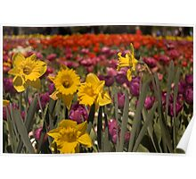 Spring at Floriade, Canberra Poster
