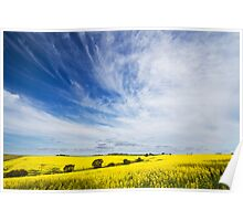 Canola Fields 2 Poster